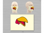 face-masks-for-children-animal-patterns-10222
